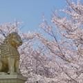 花見する獅子