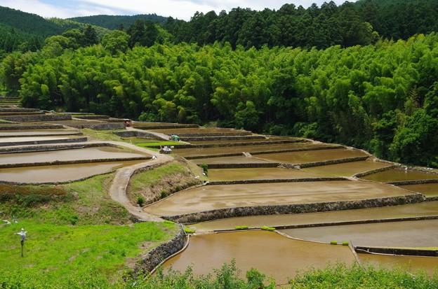 写真: 田植えの季節