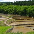 Photos: 田植えの季節