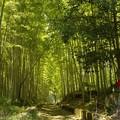 Photos: 草枕の道