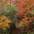 近くの紅葉が一番綺麗