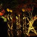 竹灯りと紅葉