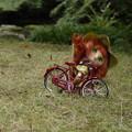 Photos: 第145回 勝手にモノコン 自転車乗りは難しい!