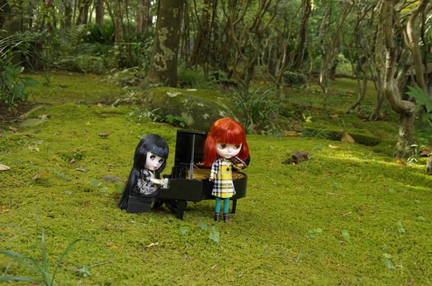 森の音楽会へようこそ♪