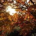 Photos: 包囲された太陽