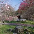 Photos: 梅は咲いた