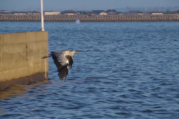 Photos: ごくたまに鳥さんも撮ります^^