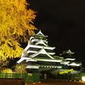 Photos: 銀杏城