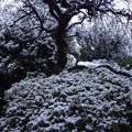 Photos: 庭が雪景色に変化中♪