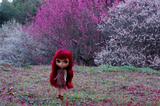 紅白の梅を背景に立つパティパッチ