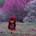 Photos: 紅白の梅を背景に立つパティパッチ
