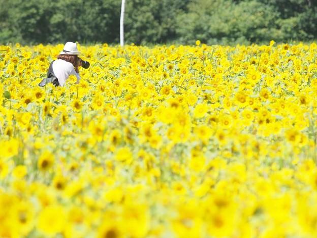 向日葵を撮る人