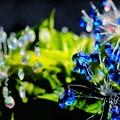 写真: 箱根ガラスの森美術館