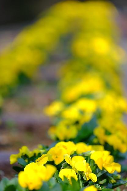 公園のお花