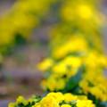 写真: 公園のお花