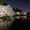 写真: 井の頭公園の夜桜