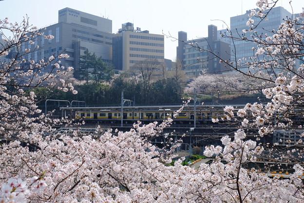 写真: 市ヶ谷駅前の桜