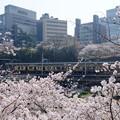 Photos: 市ヶ谷駅前の桜
