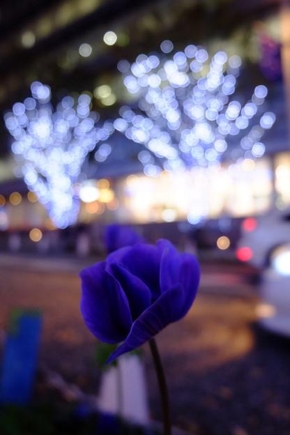 お花とイルミネーション