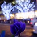 写真: お花とイルミネーション