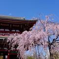 写真: 浅草寺