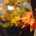 公園の紅葉