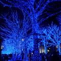 Photos: 青の洞窟 SHIBUYA