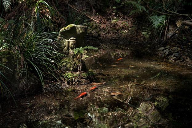 池の守護神