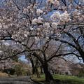 城山公園(松本)
