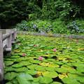 写真: 水蓮池