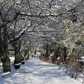 Photos: 雪のトンネルyuki