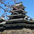 Photos: 松本城の桜