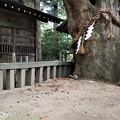 Photos: 西の欅