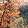Photos: もみじ