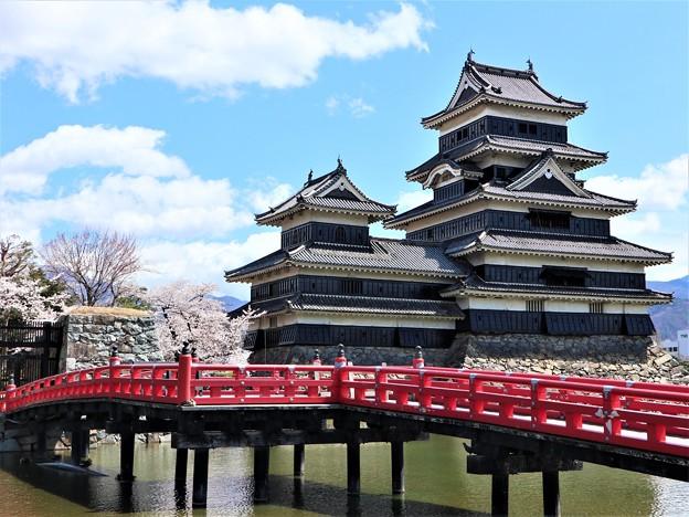 松本城と桜1
