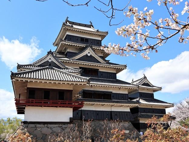 桜と松本城7