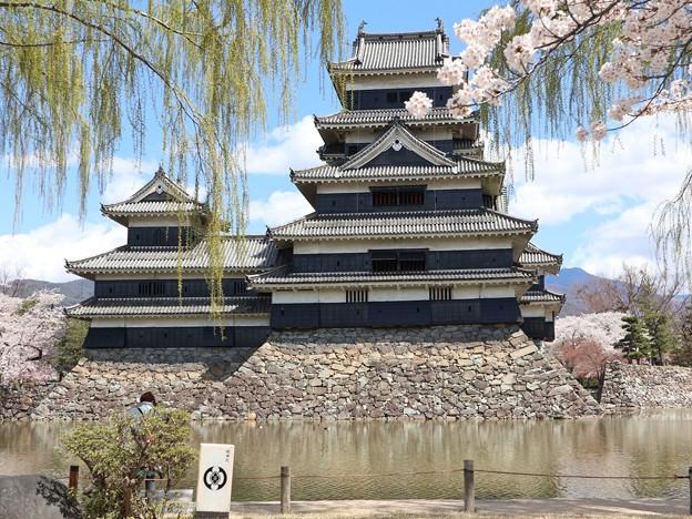 松本城と柳