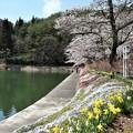 Photos: つつみの桜2