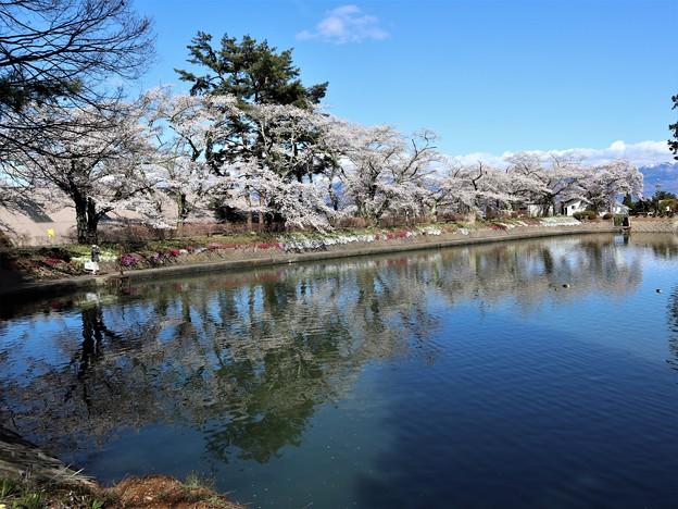 つつみの桜6
