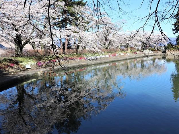 つつみの桜7