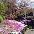 Photos: 立石公園