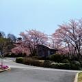 Photos: 立石公園1