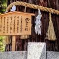 Photos: 諏訪大社下社秋宮 1