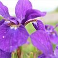 Photos: 紫色