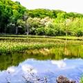 Photos: あざみ池(乗鞍高原)
