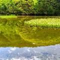 Photos: アザミ池