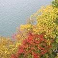 Photos: ダム湖の紅葉