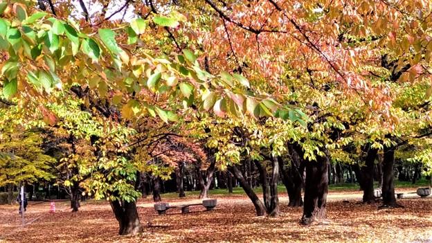 松本運動公園1