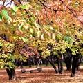 Photos: 松本運動公園1