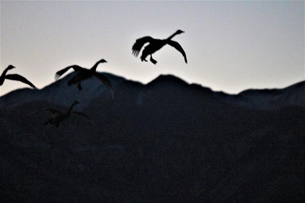 Photos: 飛行
